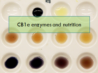 CB1e - revision - enzymes and nutrition