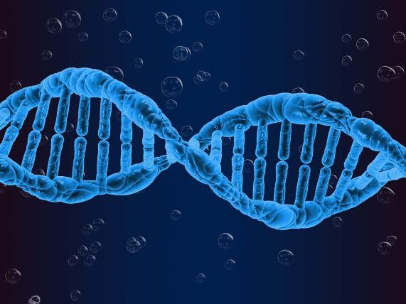 Introduction to A level genetics powerpoint