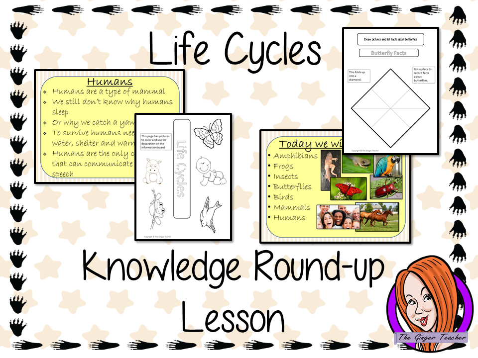 Animal Life Cycles Round up  -  Complete Lesson