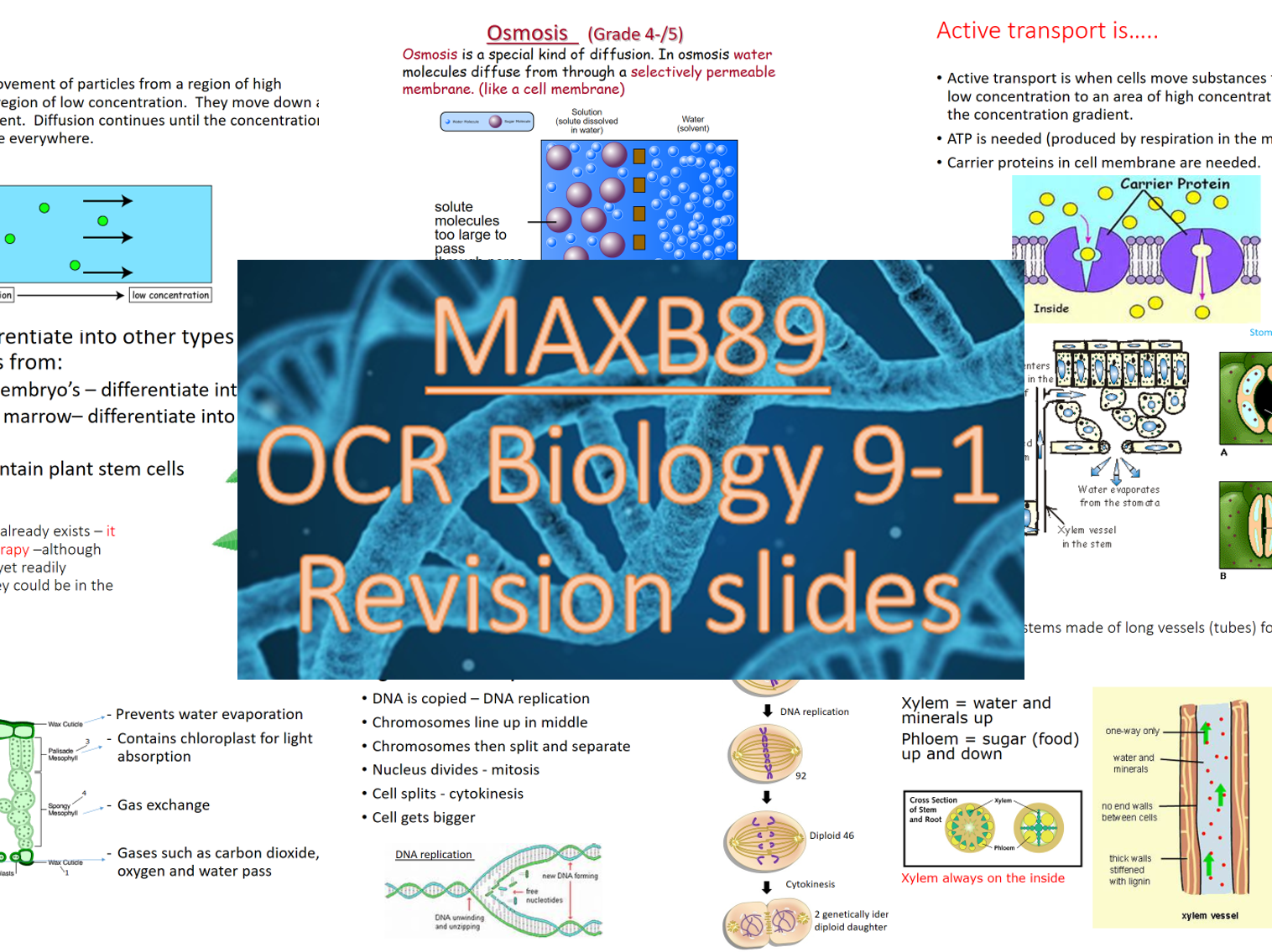 OCR 9-1 Biology Revision Slides -Entire B1-7 (All topics)