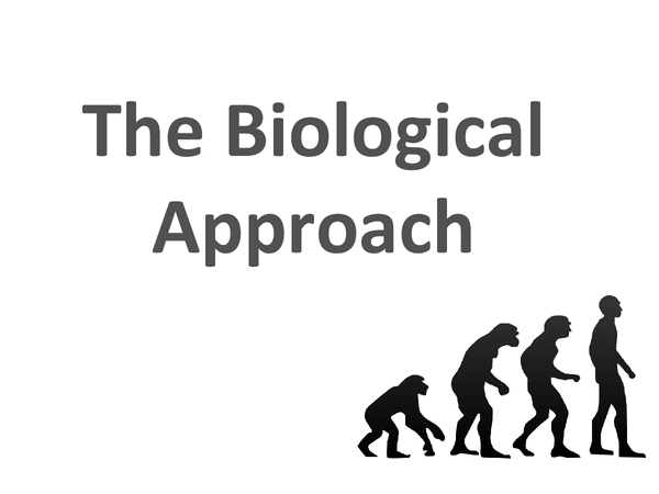 Biological Psychology Q&A revision notes