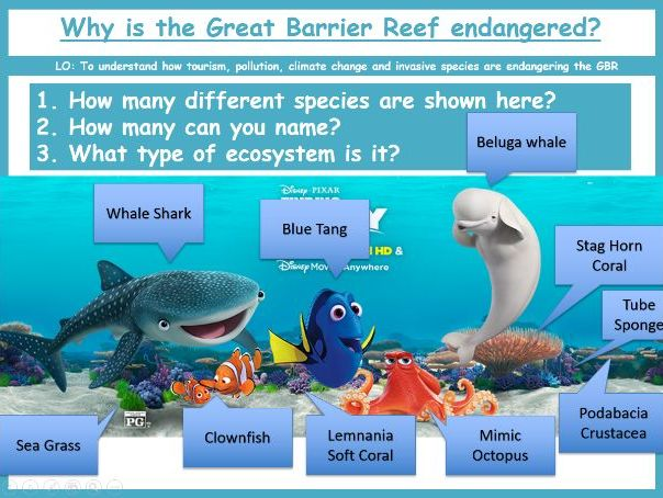 Endangered Species - Coral Reef