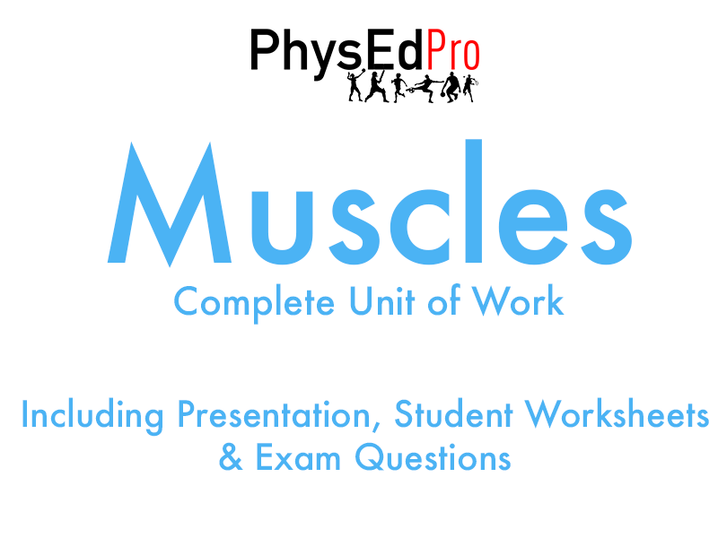 GCSE PE - Muscles of the Body -  Unit of Work - Worksheet, Powerpoint, Exam Questions - IGCSE