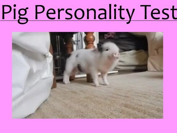 Draw the Pig Personality Test (ICEBREAKER)