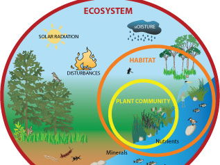 Ecosystems Powerpoint (+ Extended Task)