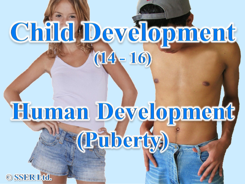 3.3 Child Development - Development - Puberty