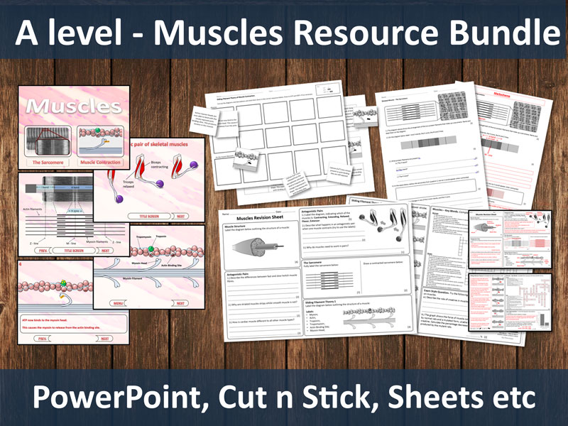 Muscles Resource Bundle (A level)