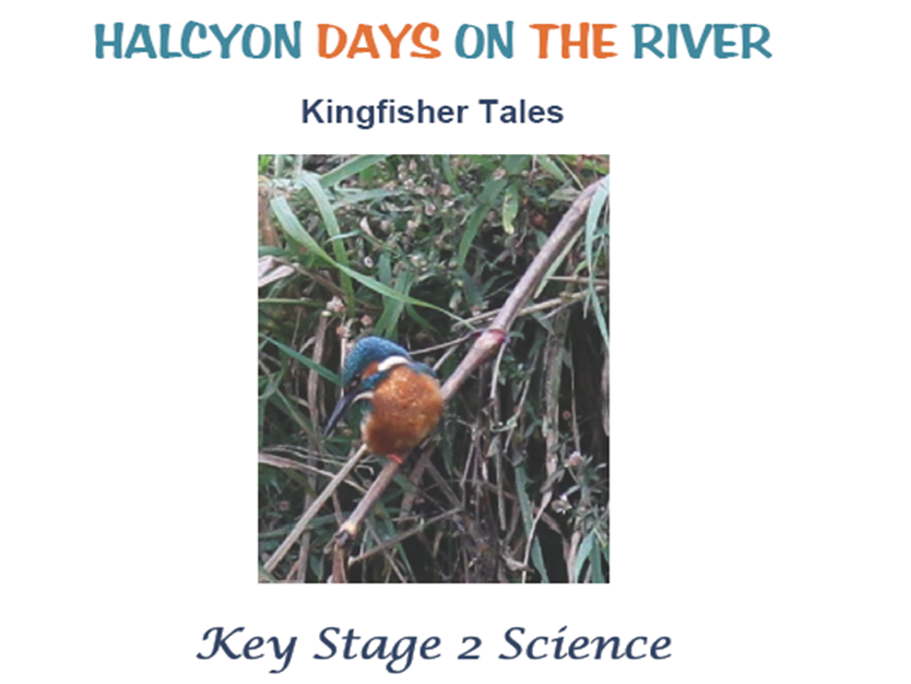 KS2 Primary Science - Living Things and Their Habitats: Kingfisher Tales