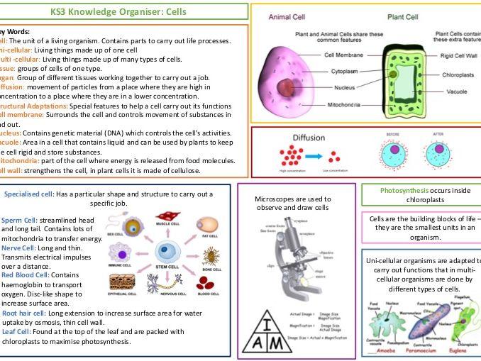 KS3 AQA Knowledge Organiser - Cells