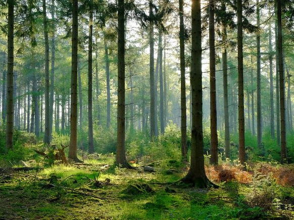 Topic 8 Forests Under Threat - Global Management Strategies
