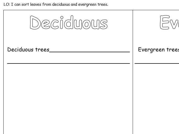 Sort Leaves - deciduous/evergreen trees - KS1 Science Activity