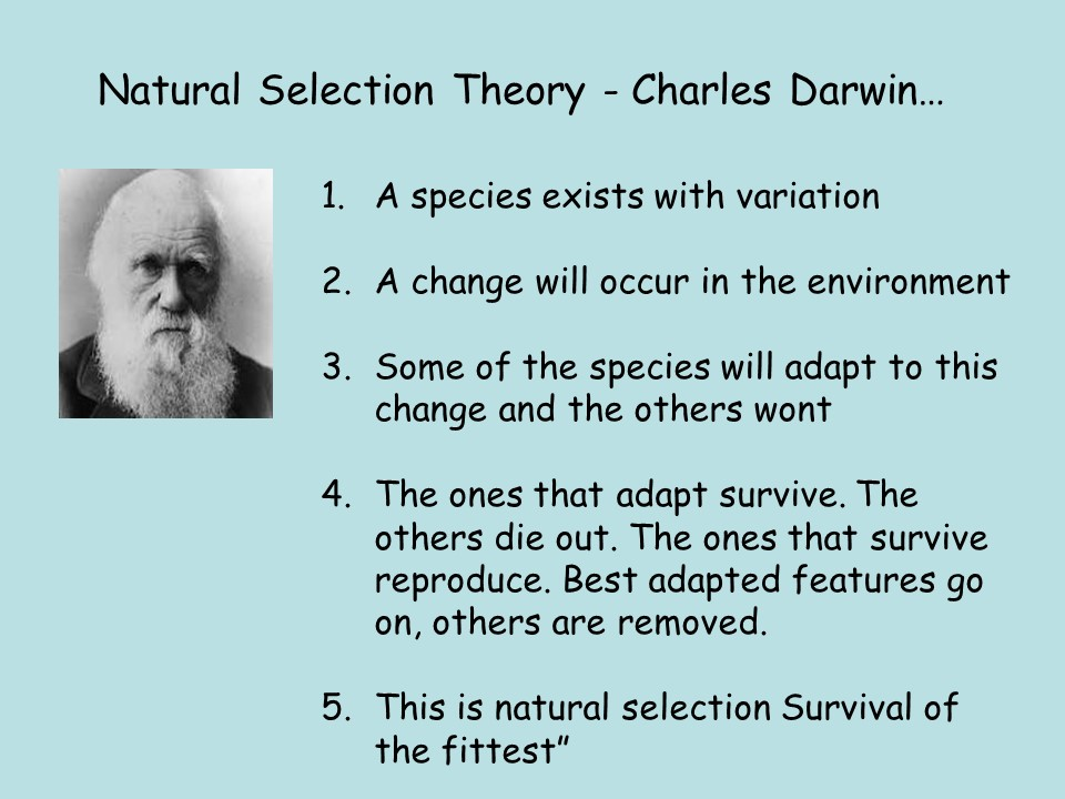 Pre GCSE Transition Unit of Work - Biology (Evolution and Genetics)
