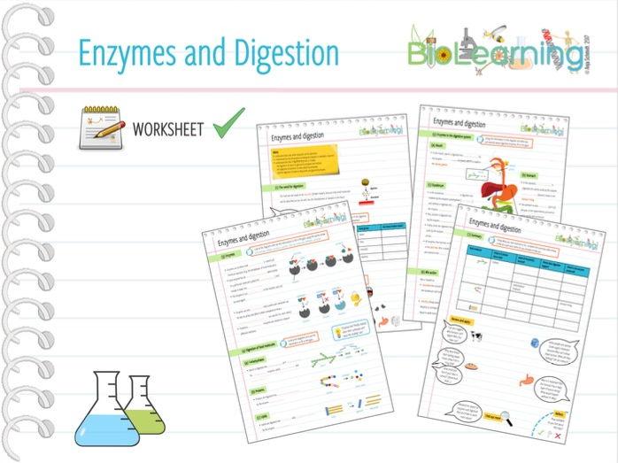 Enzymes and digestion - Worksheet (KS3/KS4)