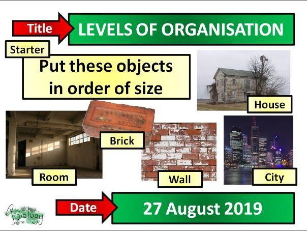 Levels of Organisation - Activate