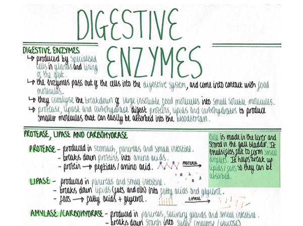 Digestive Enzymes (Organisation) Revision Poster [AQA GCSE Biology Double and Triple 9-1]