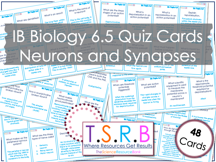 Neurons and Synapses Quiz Cards (IB Bio 6.5)