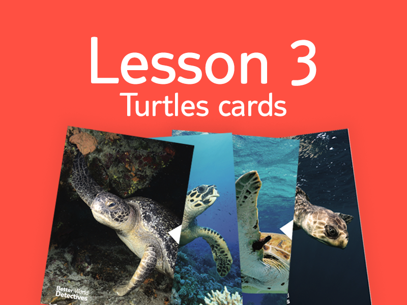 Lesson 3 - Activity 5: Turtle info cards