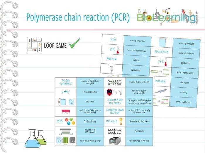Polymerase chain reaction (PCR) - Loop Game (KS5)