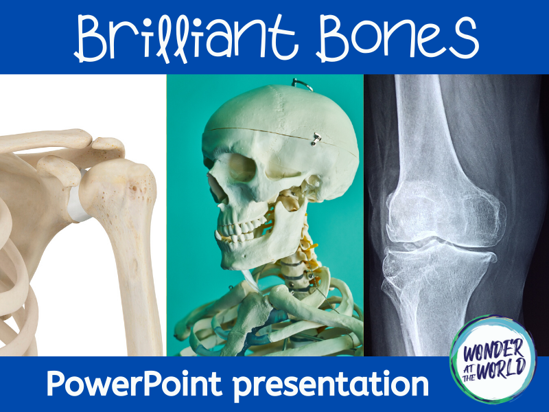 Brilliant Bones: an introduction to skeletons PowerPoint KS2