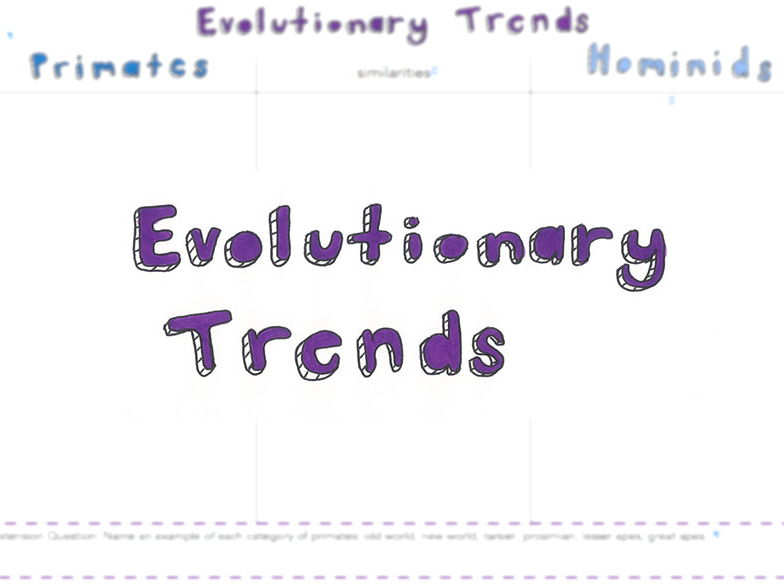 Evolutionary Trends of Primates of Hominids Comparison Table