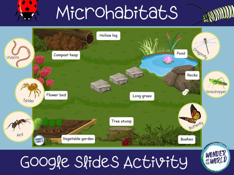 Microhabitats Google Slides activity