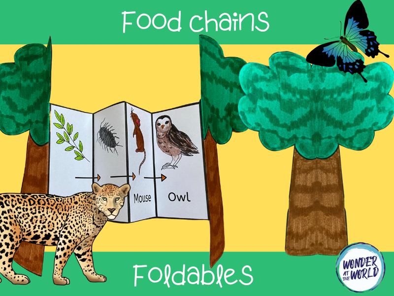 Food chain foldables KS1
