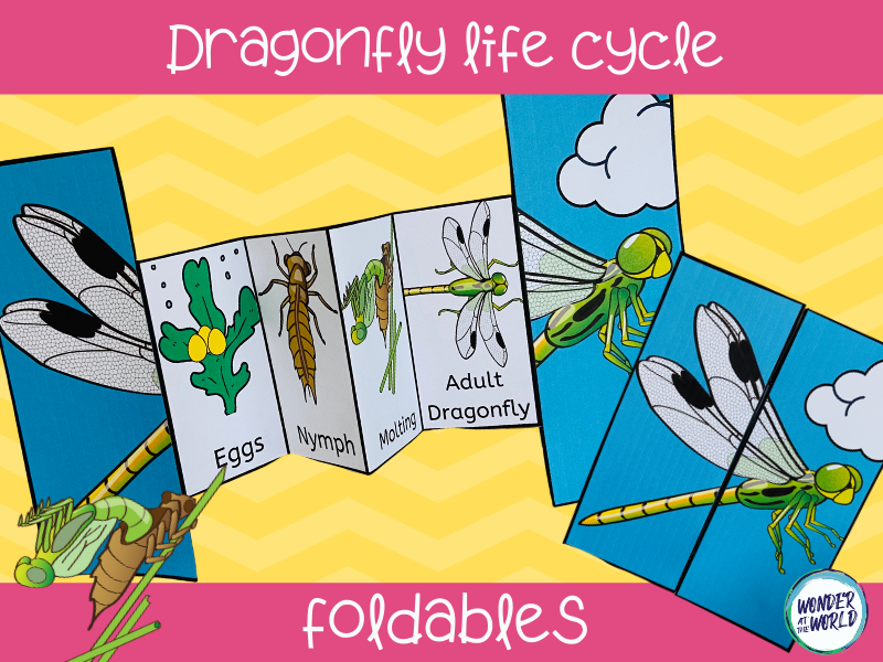 Life cycle of a dragonfly foldable