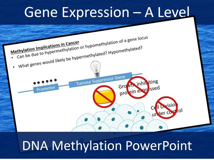 Epigenetics - Methylation - Acetylation - A Level Biology Presentation