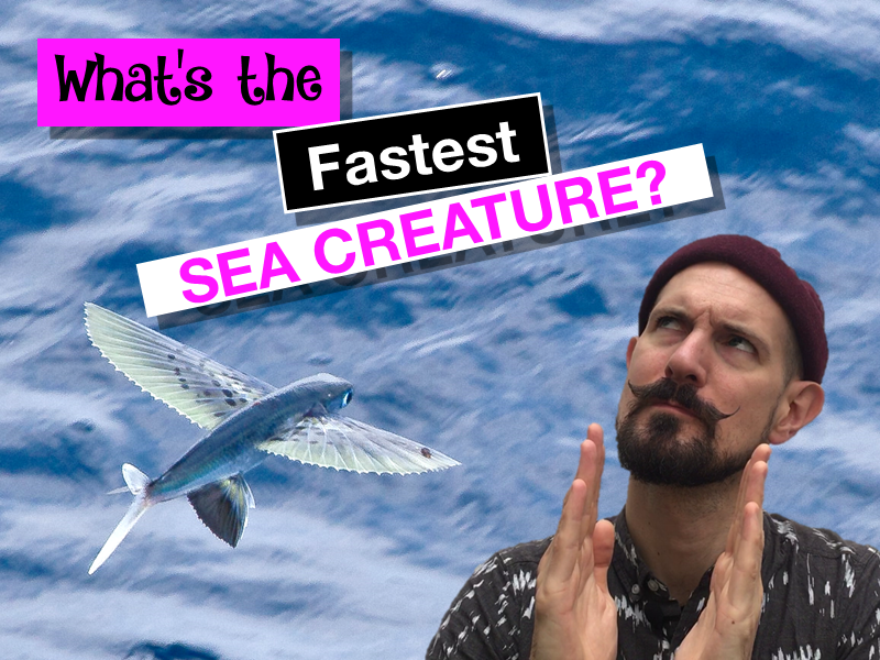 Calculating speed in the ocean - what's the fastest sea creature?