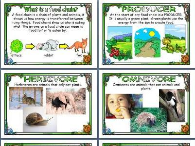 Food Chains Posters