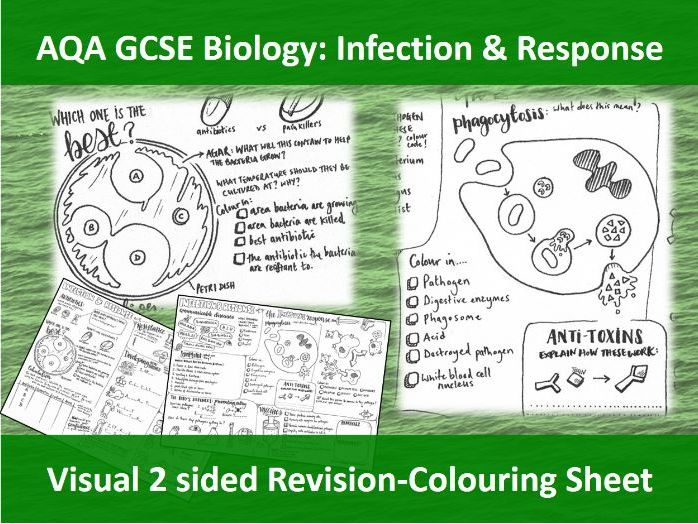 Infection and Response Revision - NEW AQA GCSE Trilogy Biology - 2 sided Revision/Colouring sheet