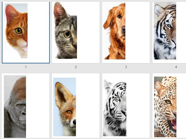 Animal symmetry art lesson
