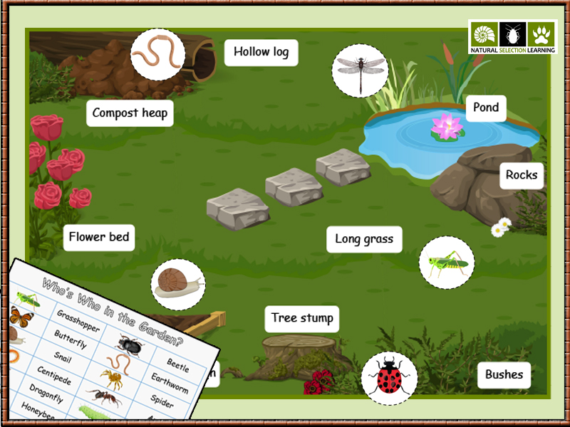 Minibeasts Micro-habitats Activity KS1