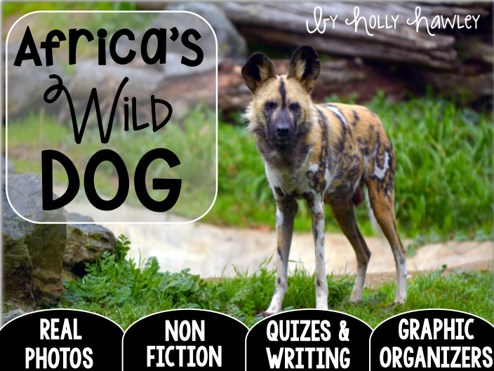 African WILD DOG-A Research Project-UK Version
