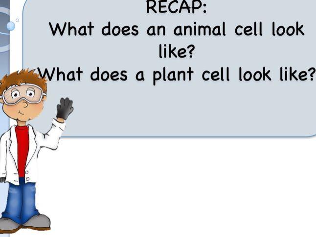 KS3 Cells Topic
