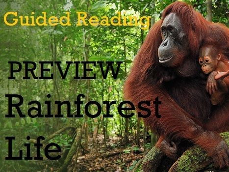 Guided Reading: PREVIEW UKS2 - Rainforest Life