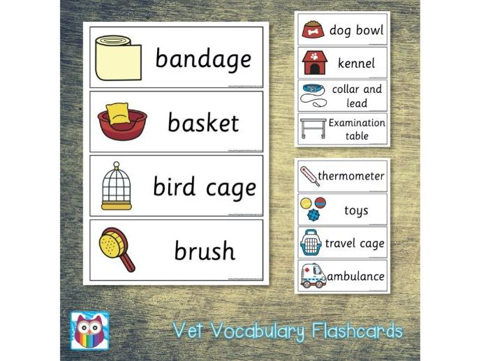 Vet Vocabulary Flashcards