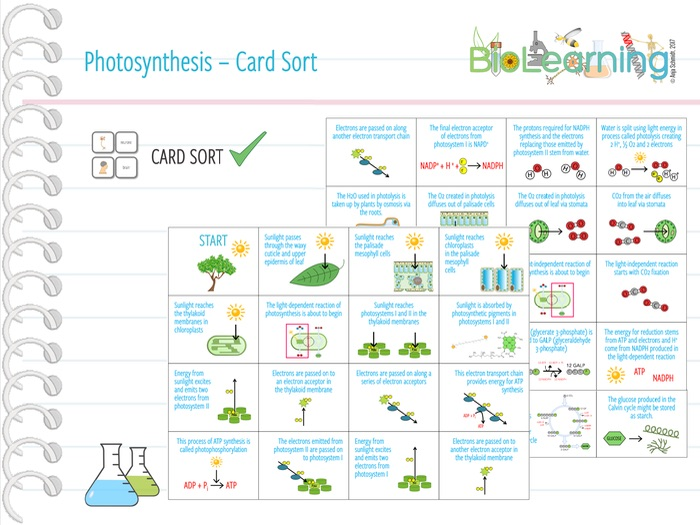 Photosynthesis - Card Sort (KS5)