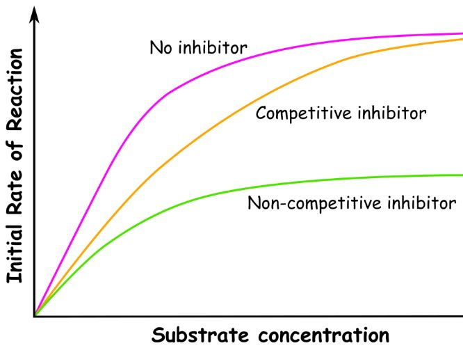 Analogy: Effect of Non-Competitive and Competitive Inhibitors on the Rate of Reaction