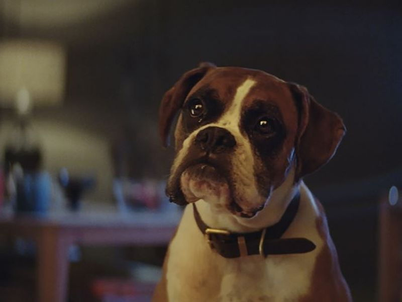 English / Literacy Recount - Buster The Boxer (John Lewis 2016 Christmas advert)