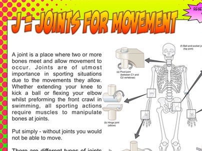 NEW Edexcel GCSE PE Unit 1 - Topic 1 - Lesson 1 – Skeletal System Fact sheet 1