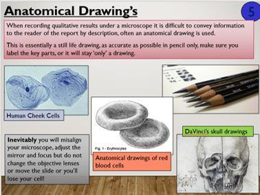 STEM KS4 Microscopy 2 (Animal Cells practical)