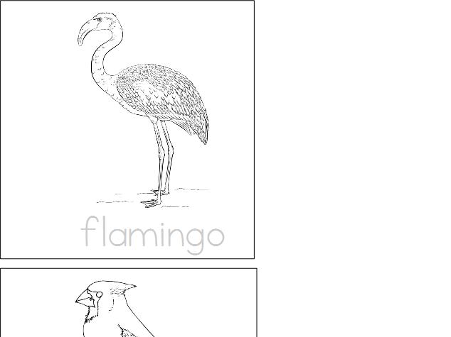 Birds - Write & Color Booklet