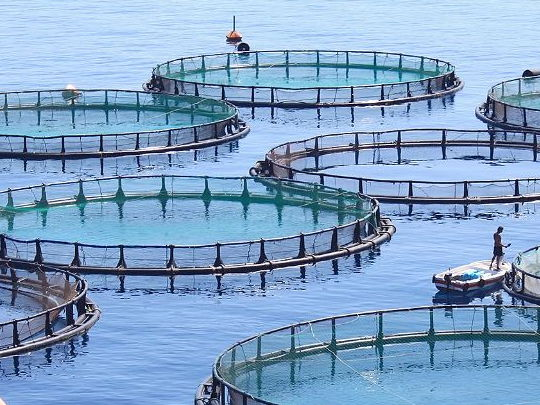 CB9 Edexcel: Lesson 7 - fish farming and non-indigenous species