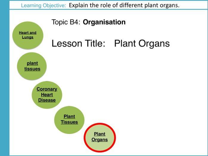 AQA GCSE: B4 Organisation: L5 Plant Organs