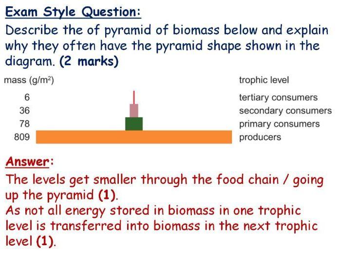 GCSE Biology Energy Transfer Lesson Powerpoint (Edexcel 9-1 SB9b) TRIPLE Pyramids Biomass