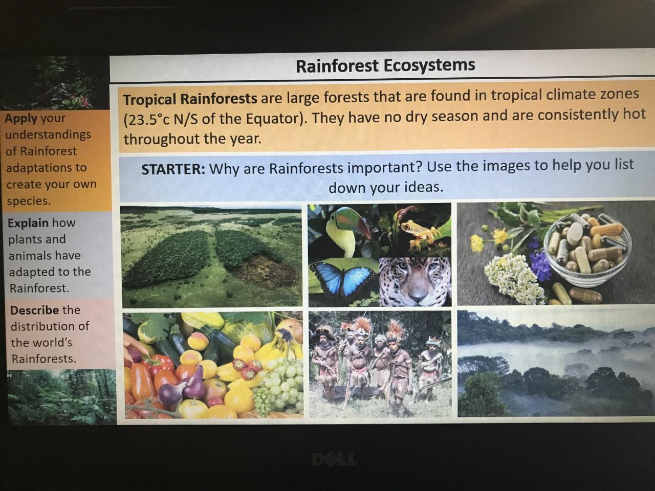 Amazon Rainforest (2 full lessons)