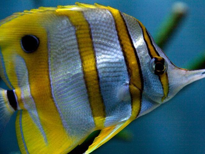 Investigating fish scales