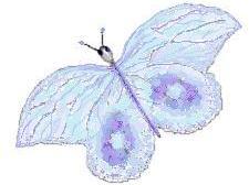 Haiku Frames - Butterflies