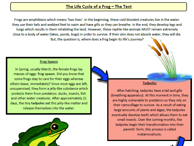 Year 5 English Comprehension